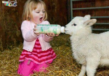 حرف زدن با حیوانات